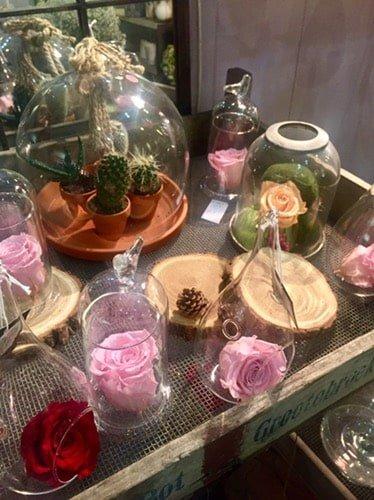 img 1167 - Roses éternelles