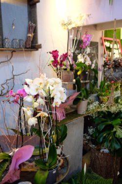 fleuriste marseille noel 15 250x375 - Un Noël chez votre fleuriste épines de paradis