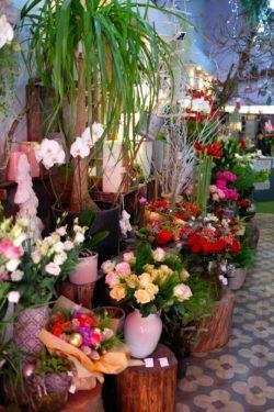 fleuriste marseille noel 5 250x375 - Un Noël chez votre fleuriste épines de paradis