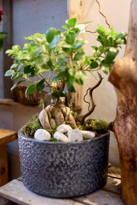 fleuriste marseille noel 2019 bonsai e1545404089791 - Décoration de Noël