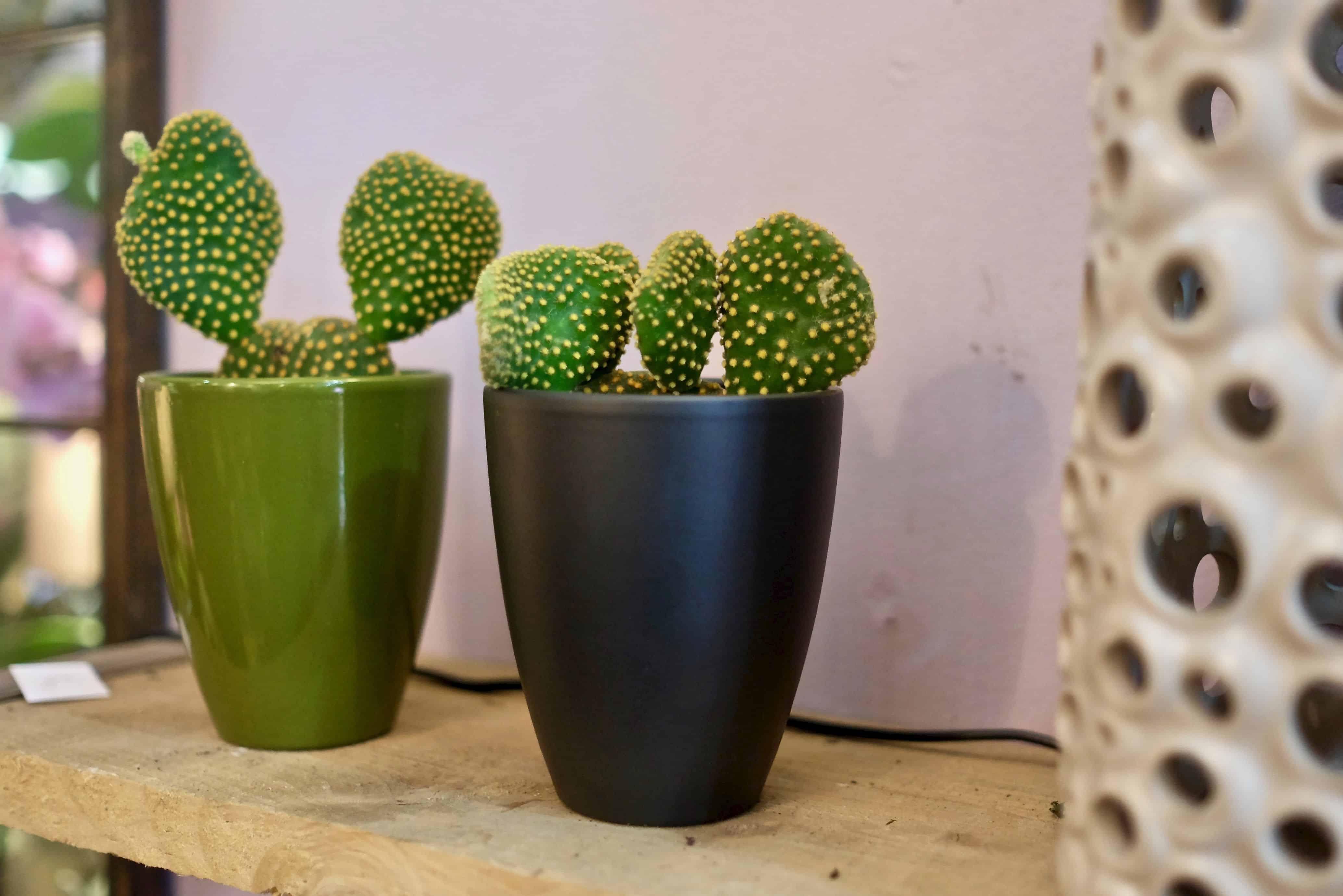 fleuriste marseille noel 2019 cactus - Décoration de Noël