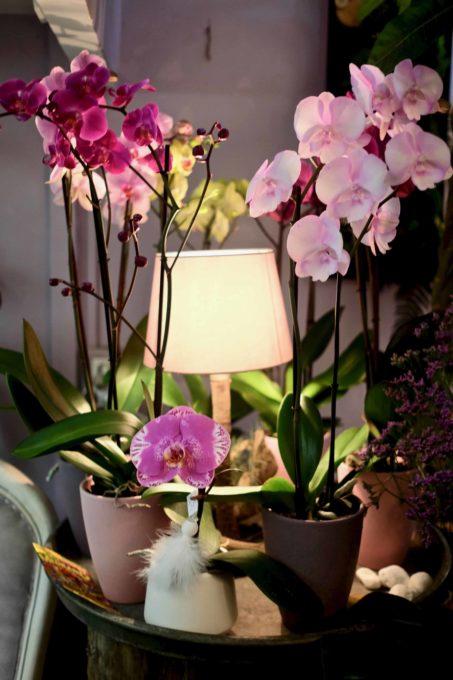 fleuriste marseille noel orchidee e1545403797702 - Décoration de Noël