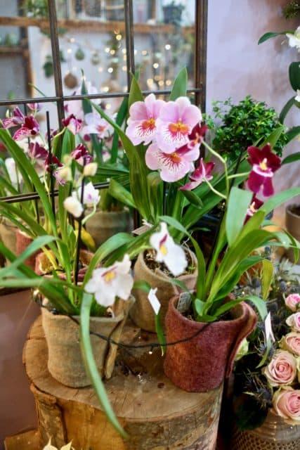 fleuriste orchidee marseille noel 2019 e1545403732812 - Décoration de Noël