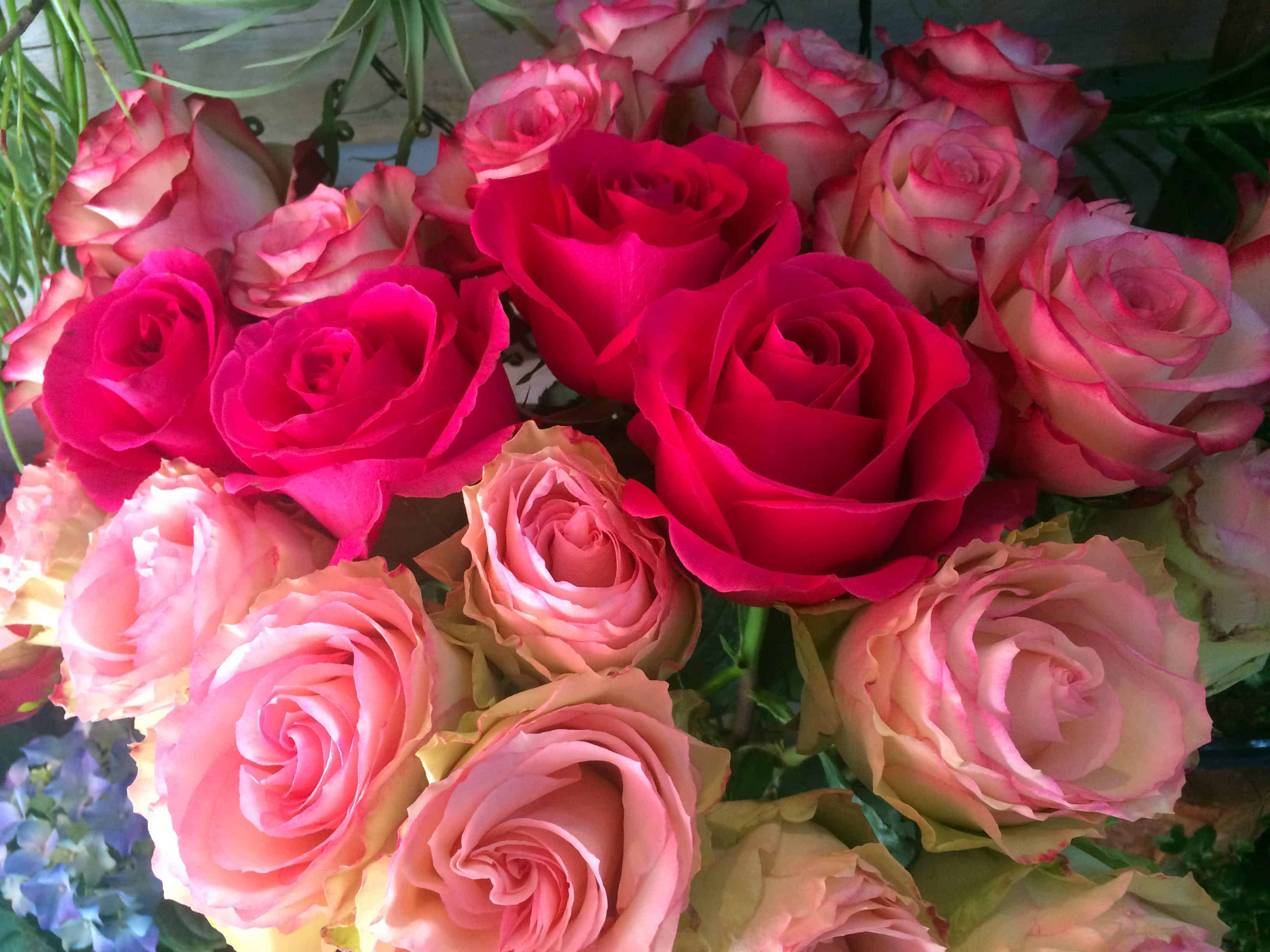 Roses roses ST Valentin