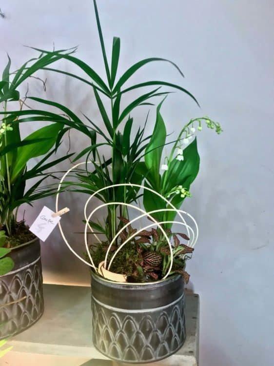 muguet fleur 562x750 - Le muguet du premier mai