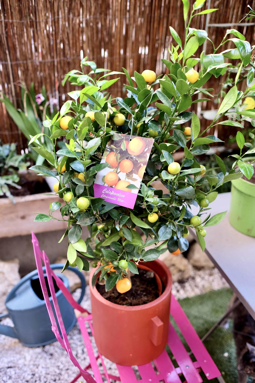 Livraison plantes marseille