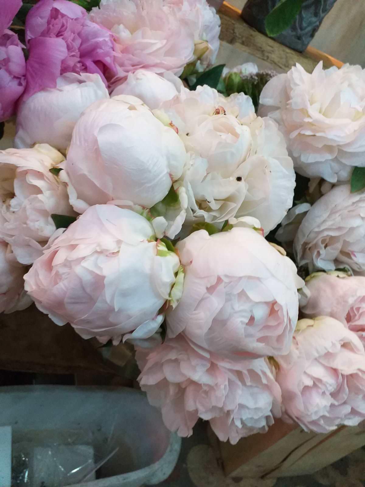 fleuriste marseille fleurs et plantes pivoine blanche