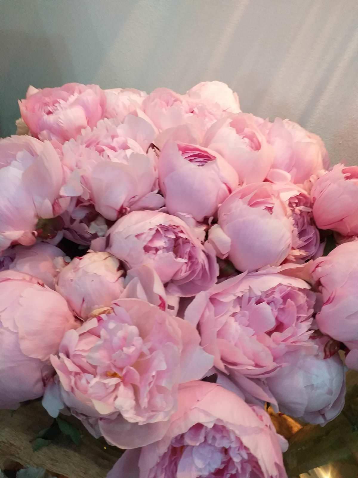 fleuriste marseille fleurs et plantes pivoine rose
