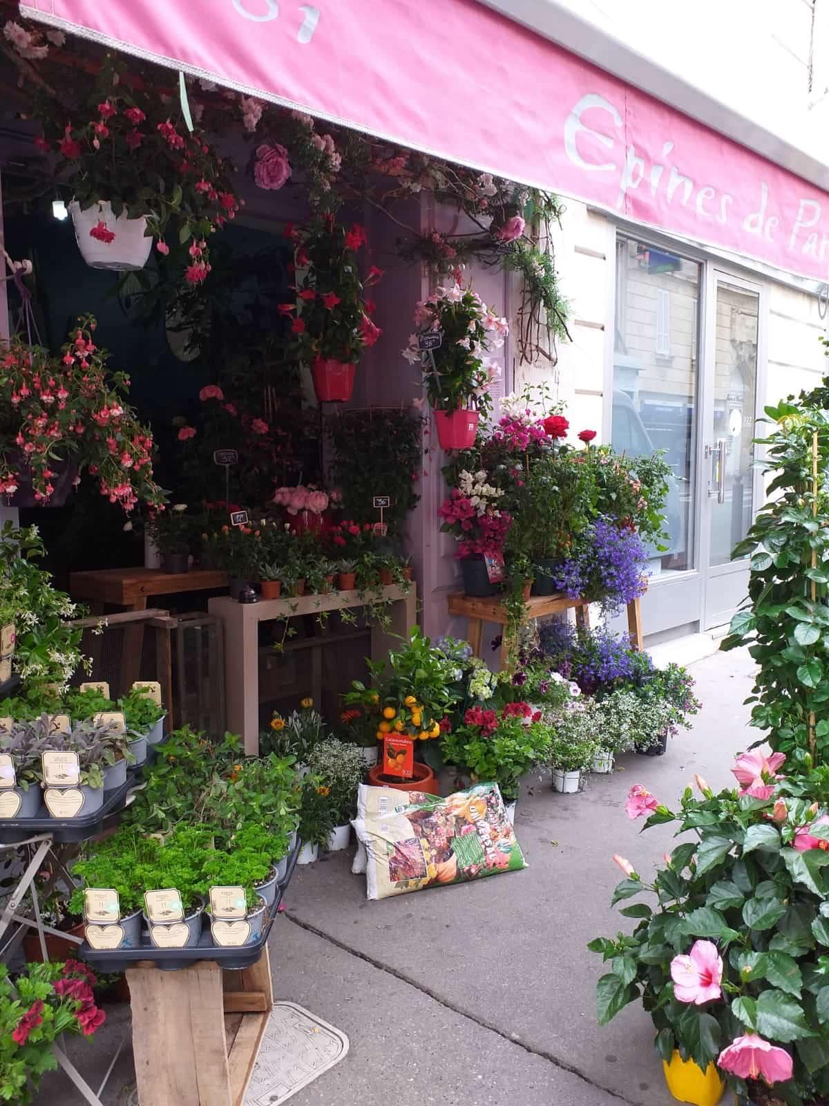 fleuriste marseille fleurs et plantes