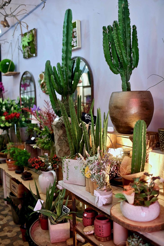 plantes fleuriste sur Marseille
